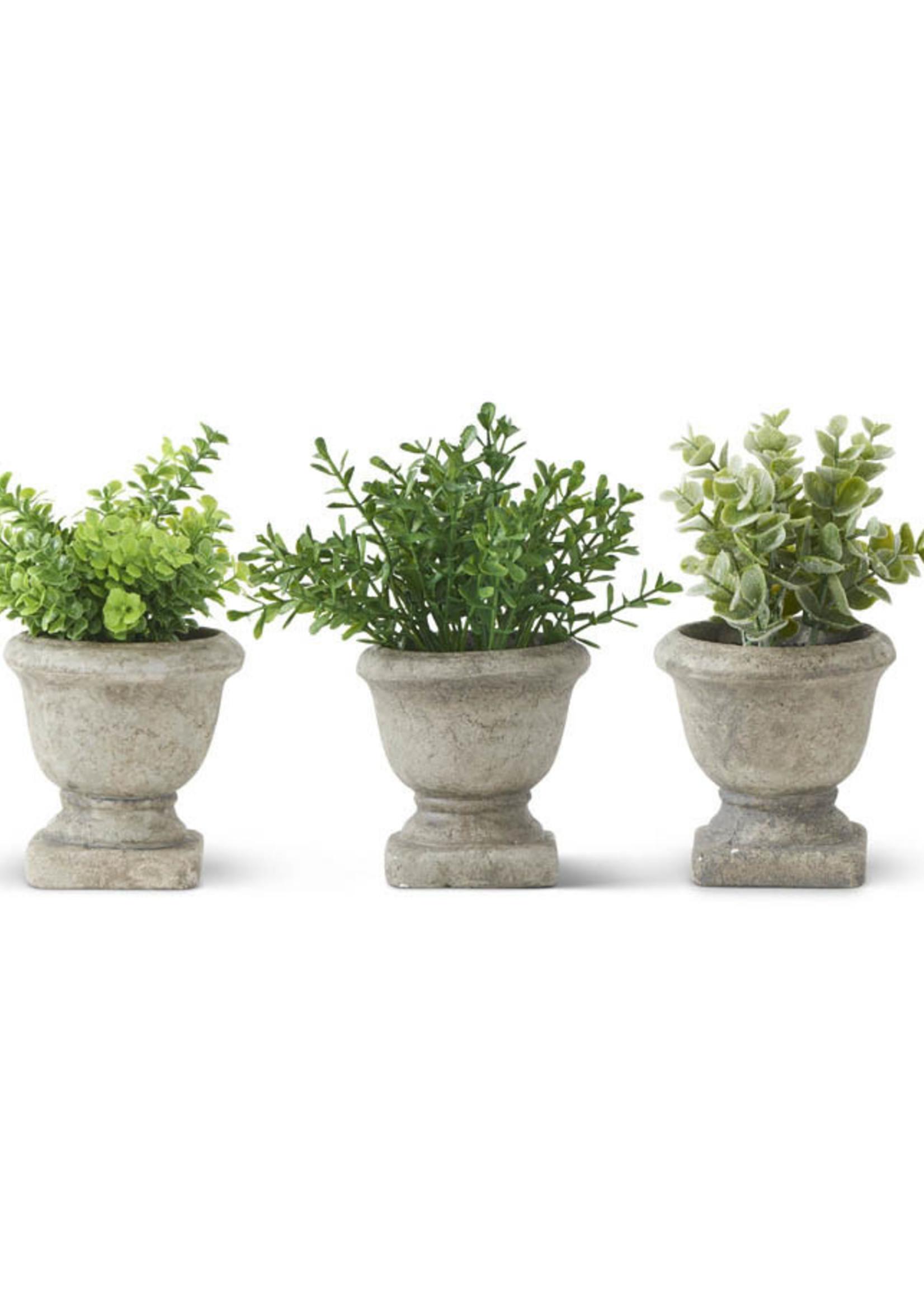 7 inch Succulent in MIni Cement Urn