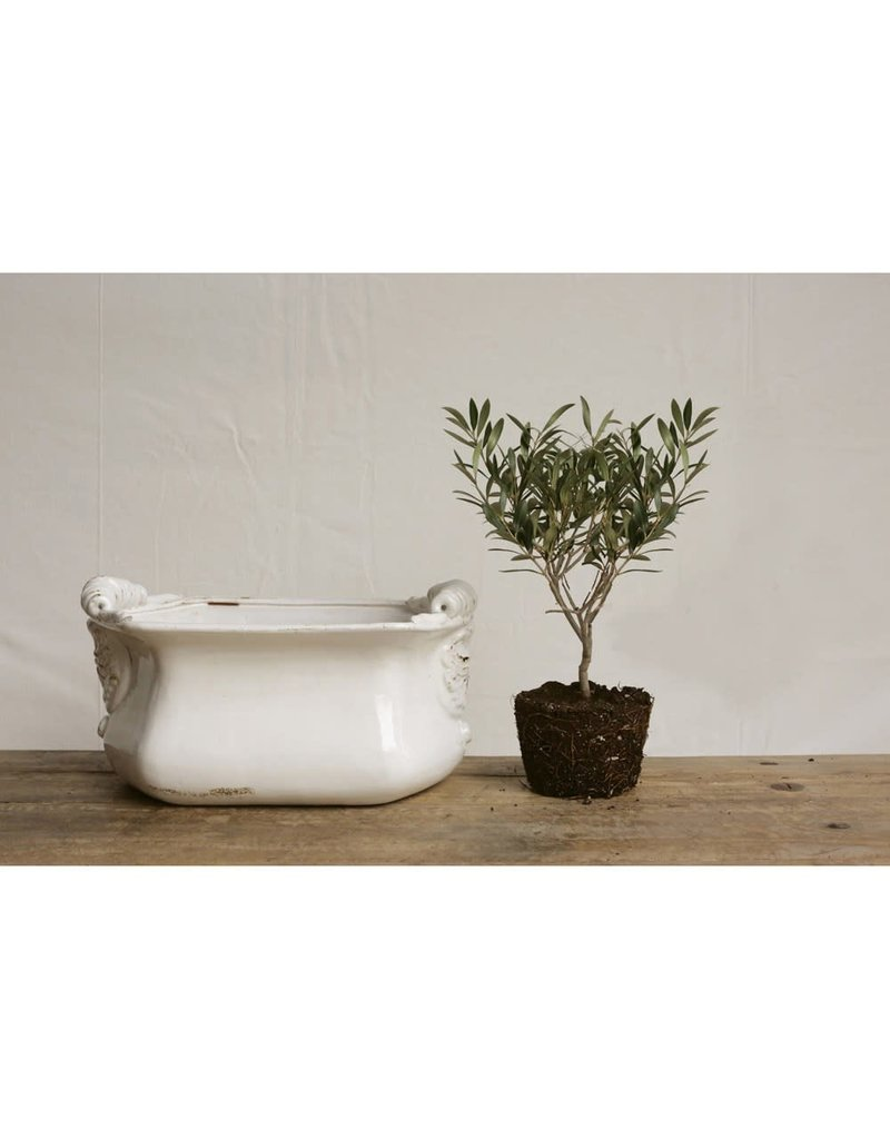 "16""L x 10""W x 8""H Decorative Terra-cotta Cachepot, White"