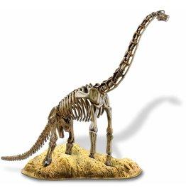 Elenco Brachiosaurus Skeleton