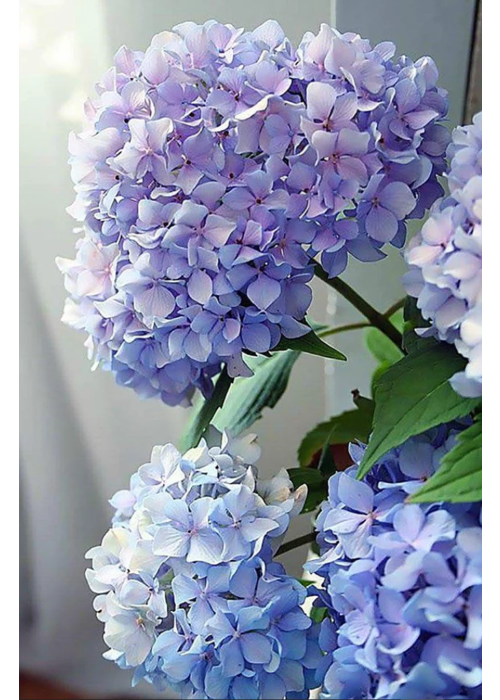 Pink Picasso Happily Hydrangea Paint By Numbers