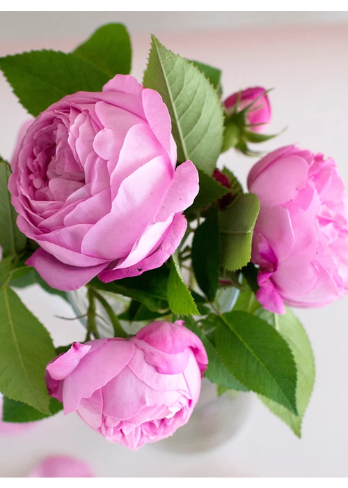 Pink Picasso Beautiful Blooms Paint By Numbers
