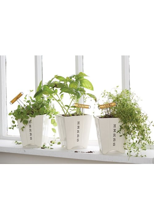 Mudpie Oregano Herb Planter Set