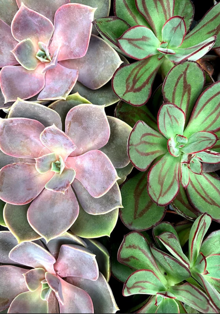 Such a Succulent Paint By Numbers