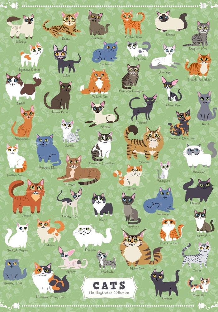 Cat Breeds Puzzle