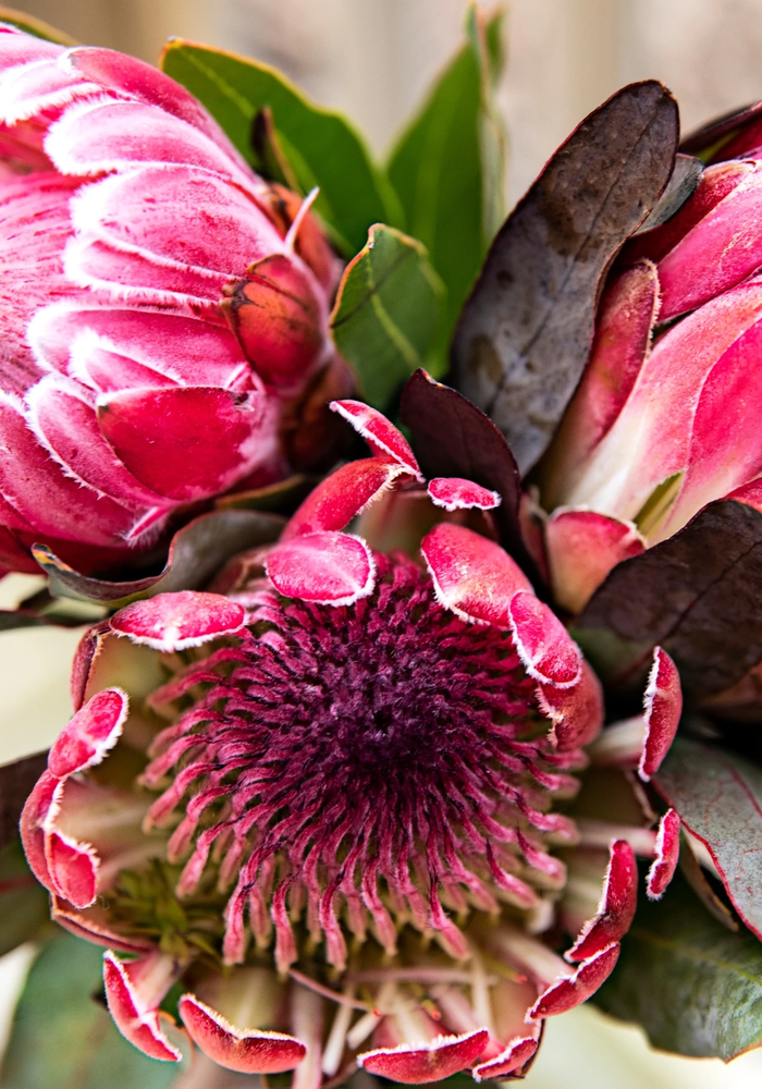Pretty Protea Paint By  Kit