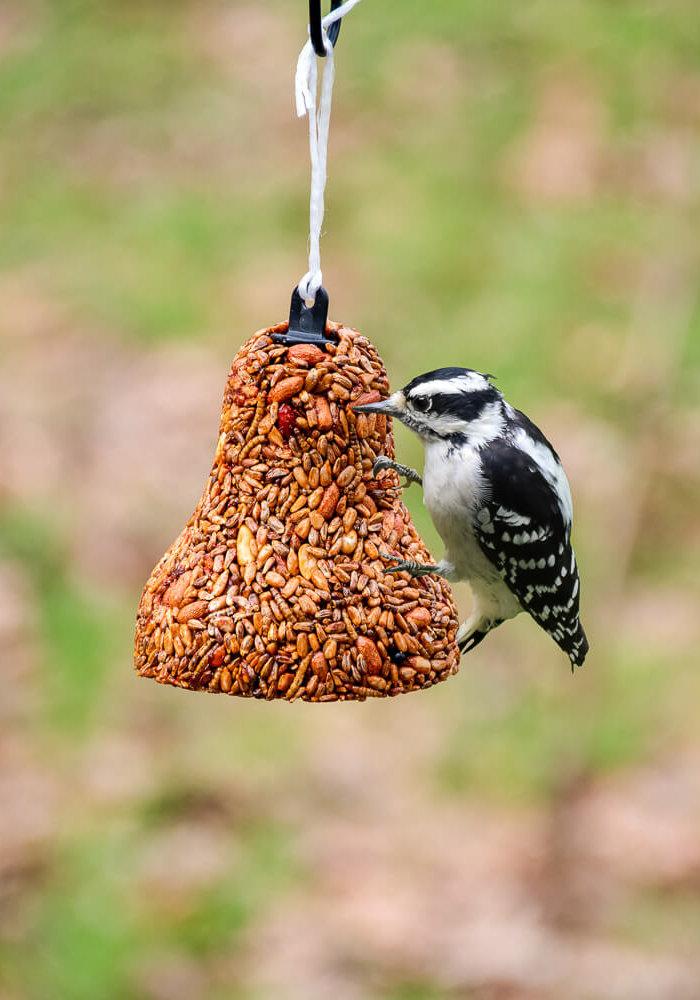 """Flaming Hot Feast"" Anti-Squirrel Birdfeed Bell"