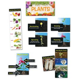 Plants-Mini-Bulletin