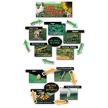 Life Cycles-Mini-Bulletin