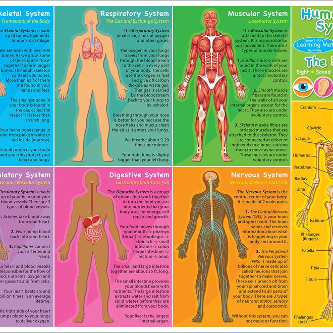 SMart Poly Learning Mat-Human Body