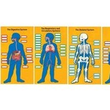 Human Body Bulletin Board Set