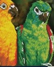 Diamond Dotz-Rainbow Parrots