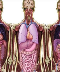 Look Inside Me MRI Scan