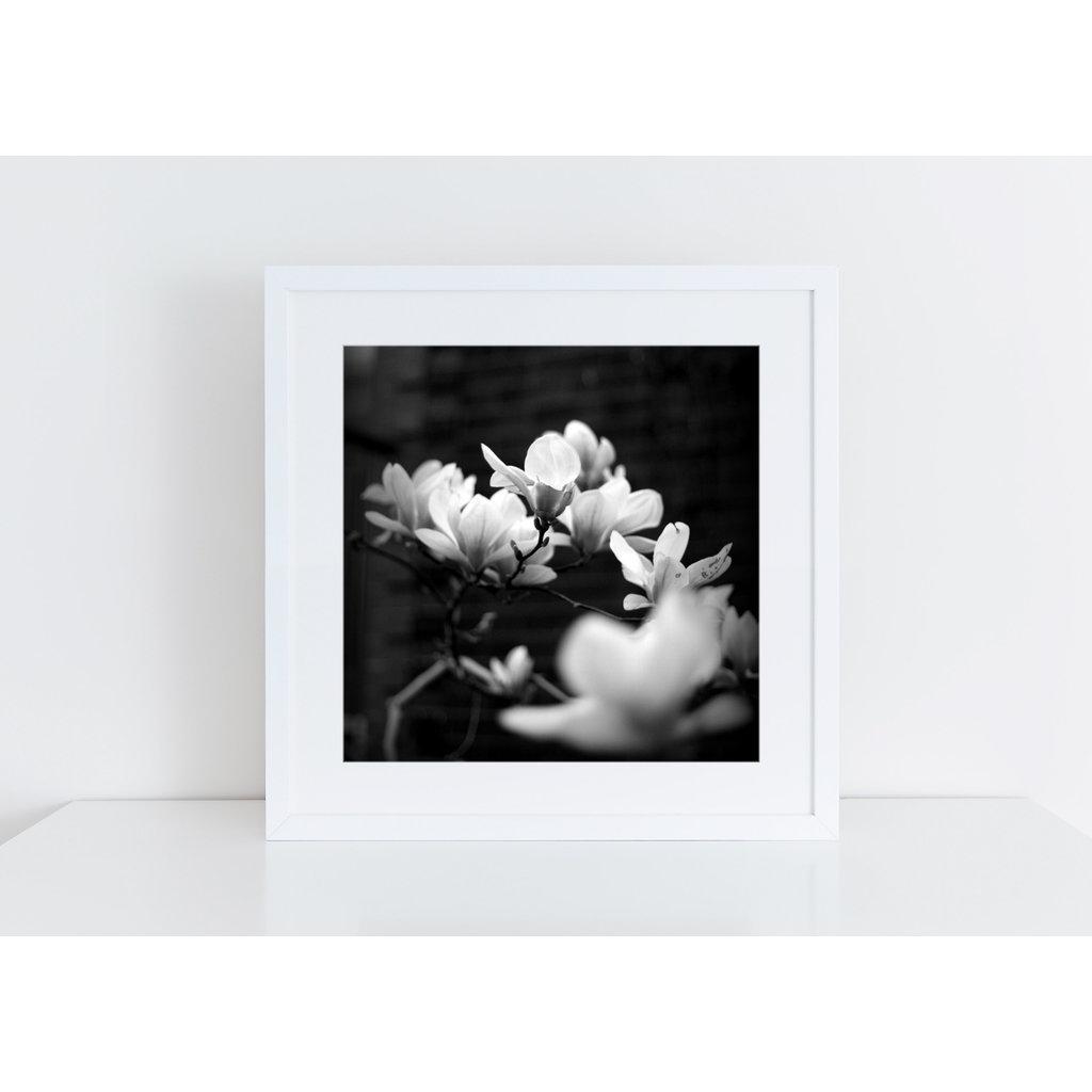 Veni Etiam Photography Photographie Elegance - 8X8