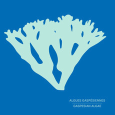 Les Pétards Shampoing solide aux algues gaspésiennes