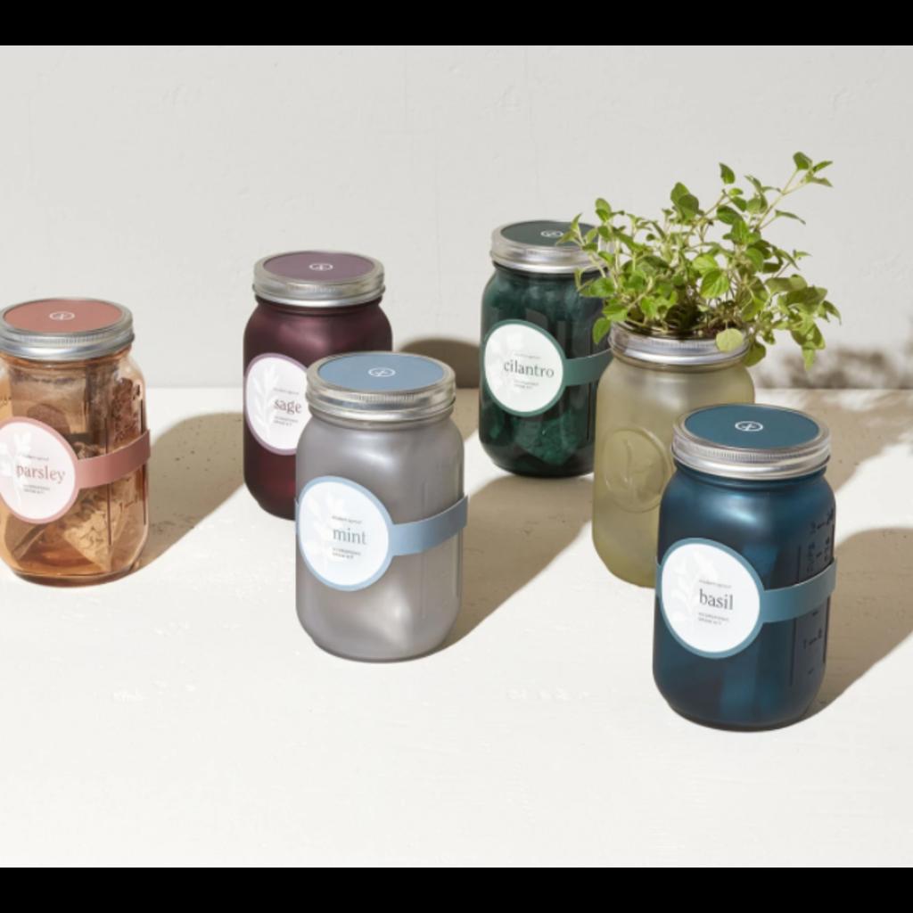 Modern Sprout Pot de fines herbes - Basilic