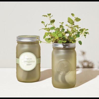 Modern Sprout Pot de fines herbes - Origan