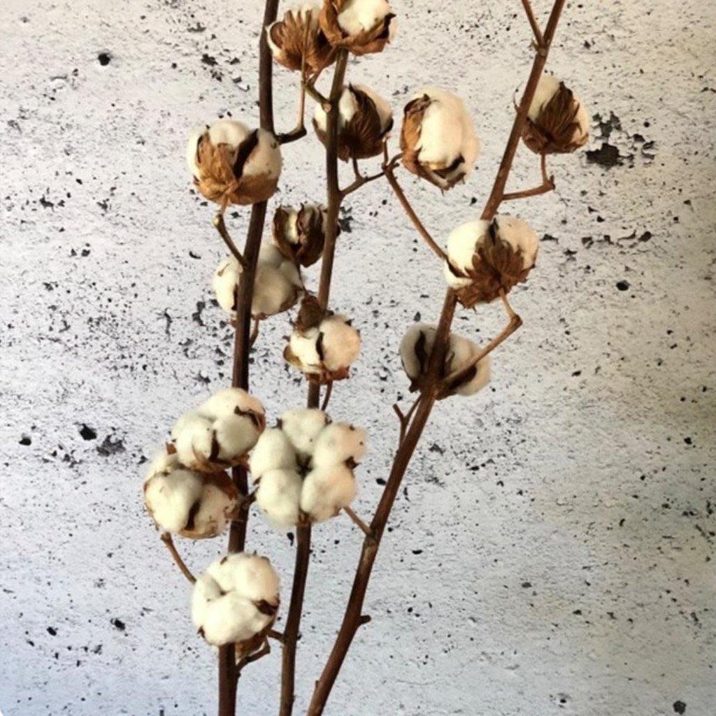 Vert Bohème Fleur de coton