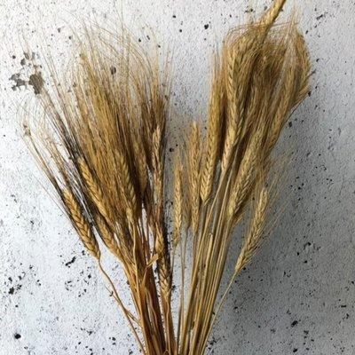 Vert Bohème Branche de blé