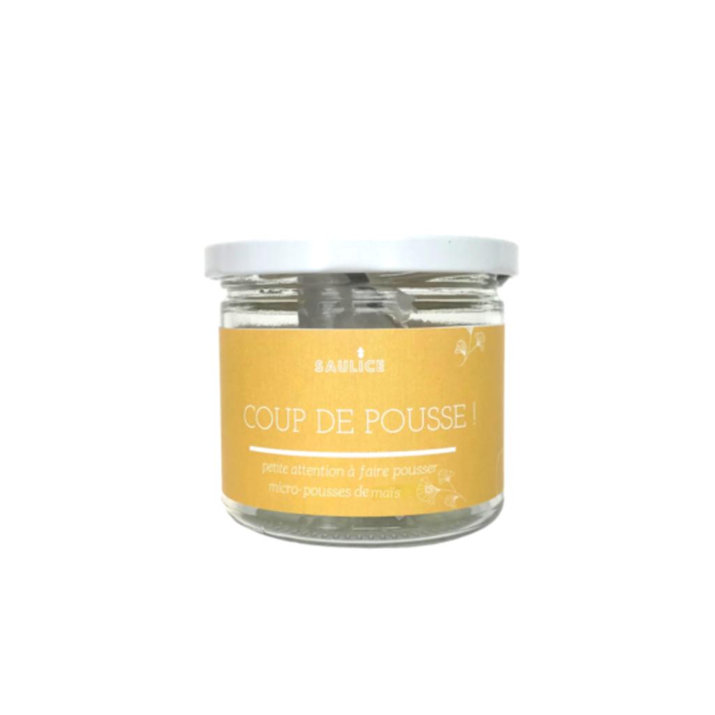 Saulice Micro-pousse de maïs biologique - Coup de pousse!