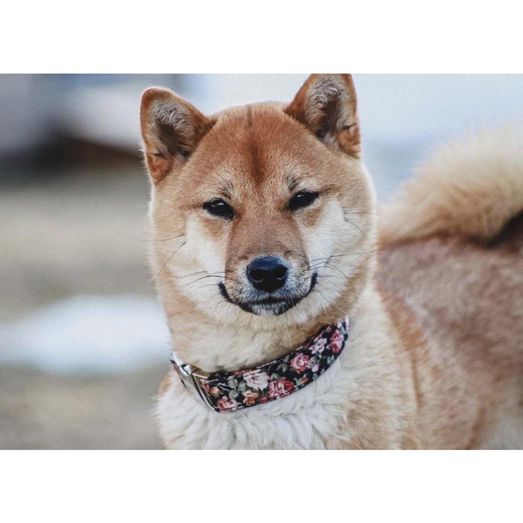 Idoggos Collier pour chiens - Rosie