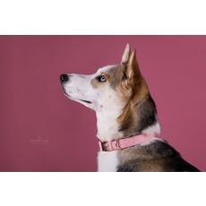 Idoggos Collier pour chiens - Rose Bonbon