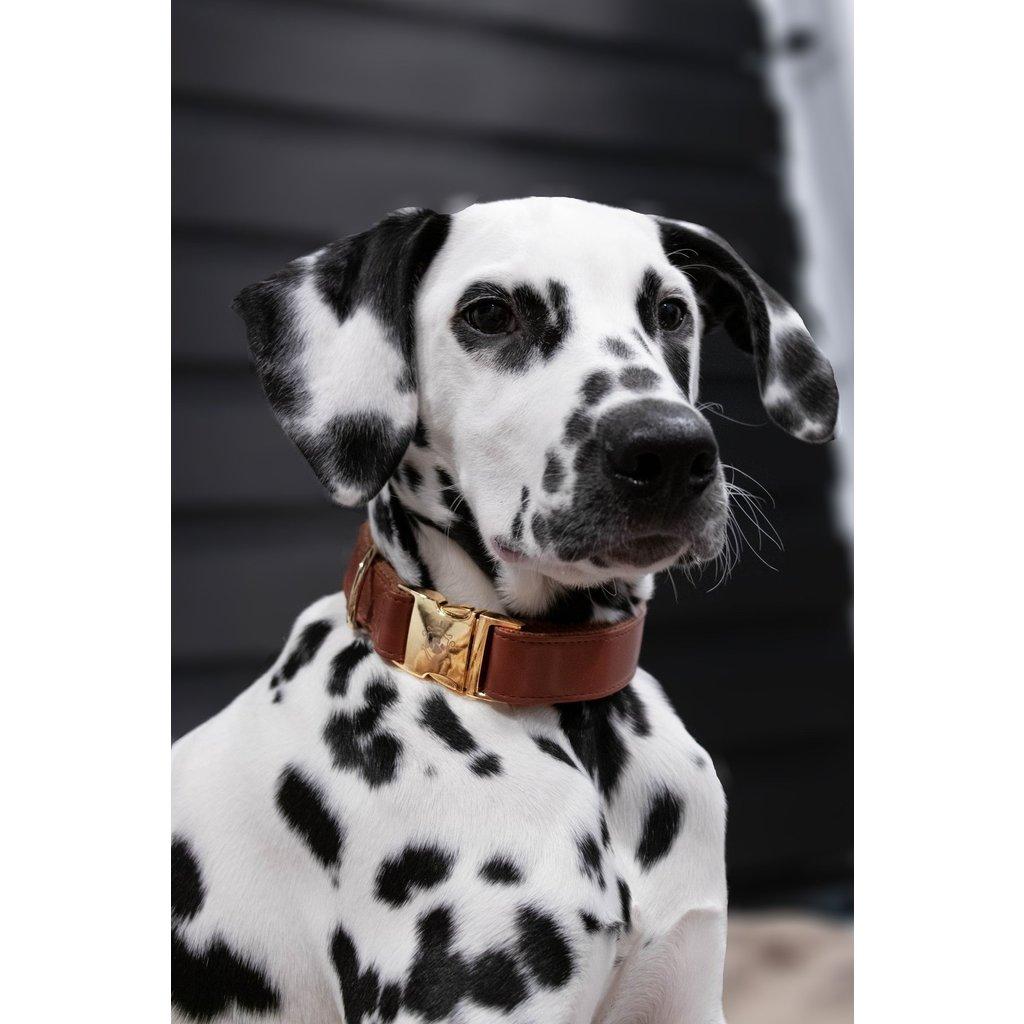 Idoggos Collier pour chiens - Calvados