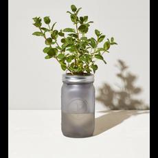 Modern Sprout Pot de fines herbes - Menthe