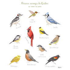 Hobeika Art Affiche - Oiseaux sauvages du Québec
