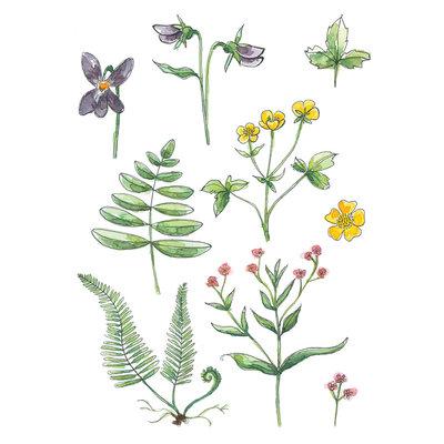 Stéphanie Renière Mini carte - Plantes