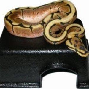 Black Reptile & Snake Hide Box