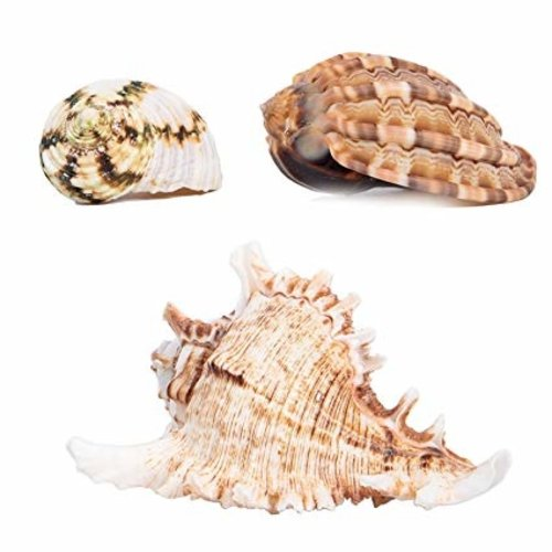 Zoo Med Zoo Med Hermit Crab Fancy Shell