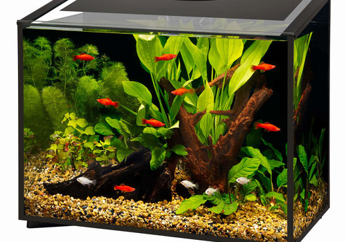 Aquariums, Kits & Stands