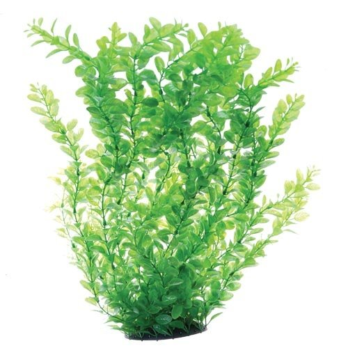Underwater Treasures Green Cardamine