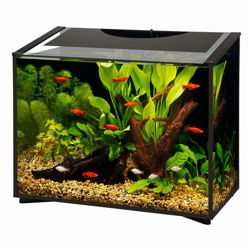 Aqueon Aqueon Ascent Frameless Aquarium Kit