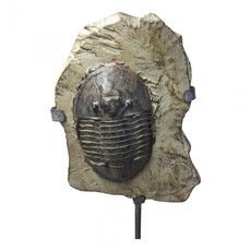 Moe's Home Collection Trilobite Fossil on Stand