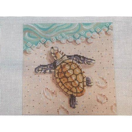 Baby Sea Turtle on Beach