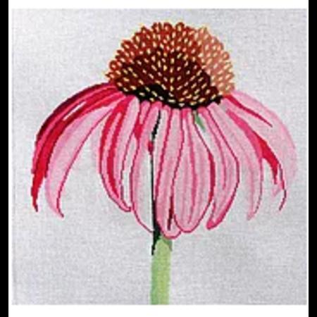Regal Cone Flower