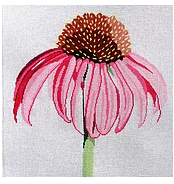 Regal Cone Flower
