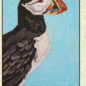 Puffin13 Ct.