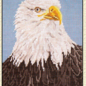 Bald Eagle 18 Ct.