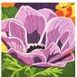 Anemone Primrose #1