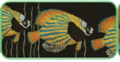 Fish Insert