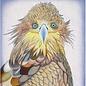 Hawk 18m