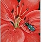 Tiger Lily and Tiger Beetle