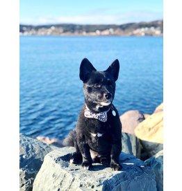 Canvas Pet Bow Tie Polka Dots Small