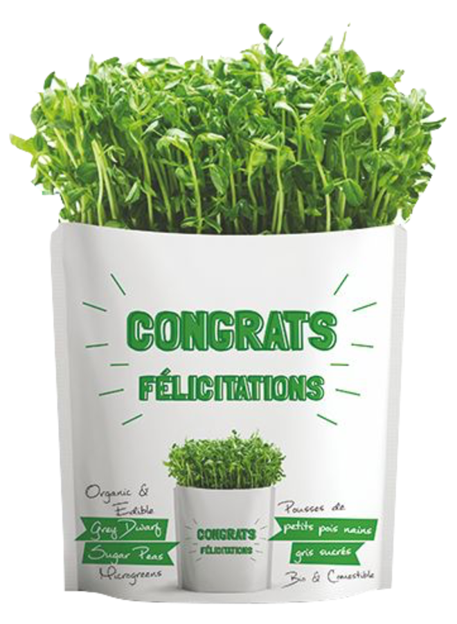 Congrats Pouch