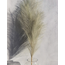 Large Olive Faux Pampas Grass - 1 Stem