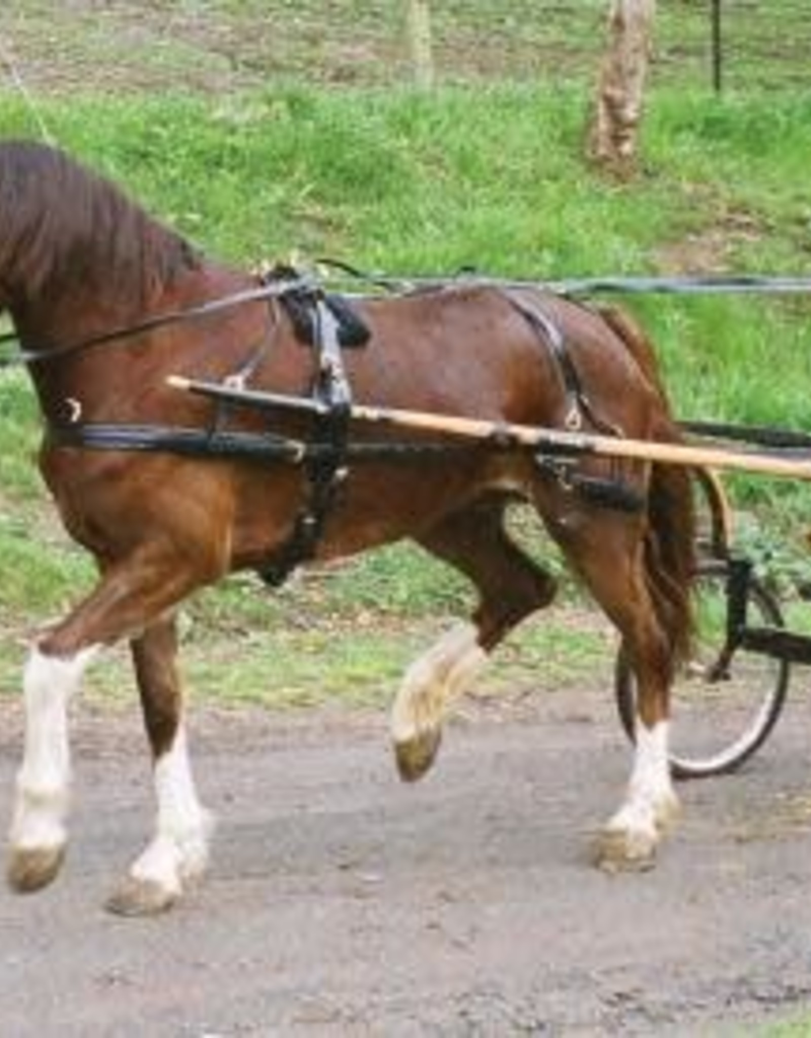 Showcraft Synthetic - Driving Harness - Pony