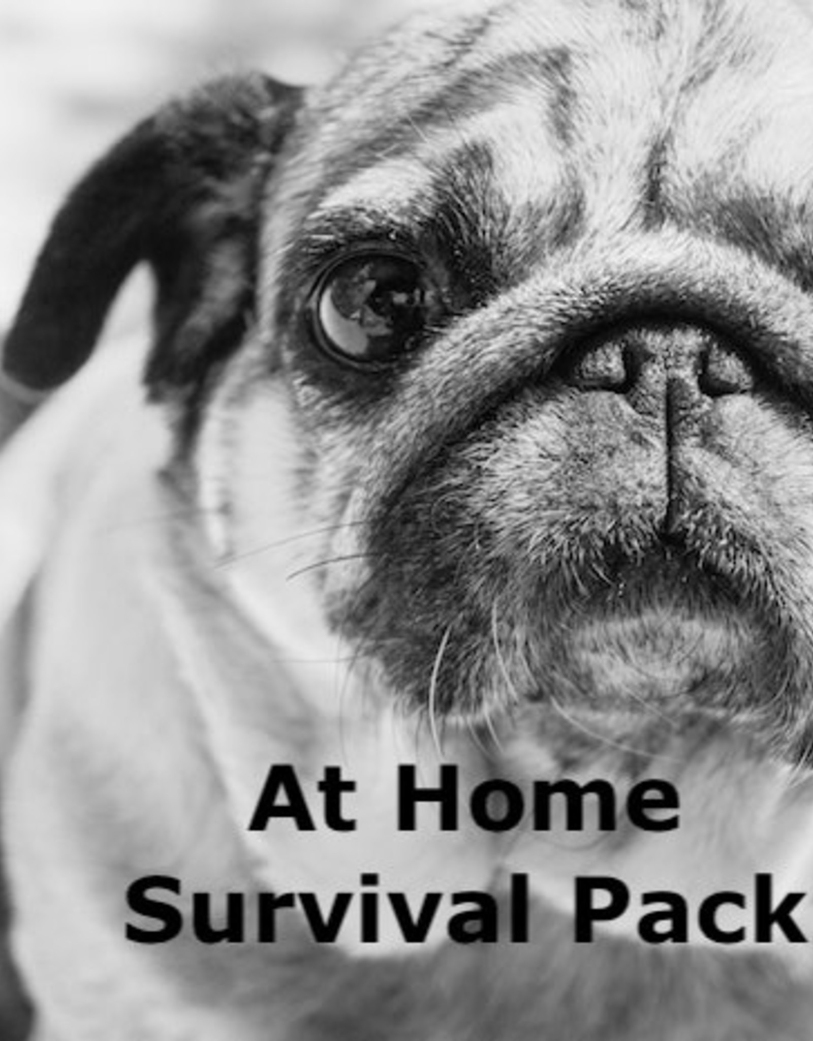 Home Survival Pack Small Dogs