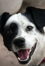 New Dog Starter Pack - Large Dog